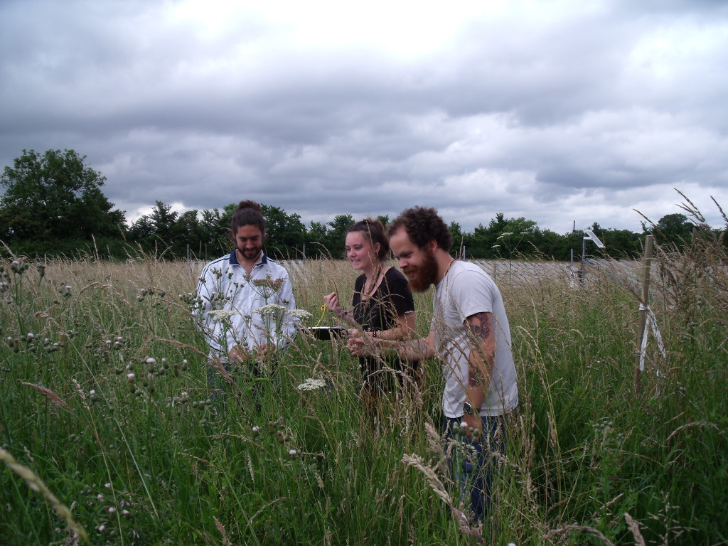 citizen scientists surveying for pollinators