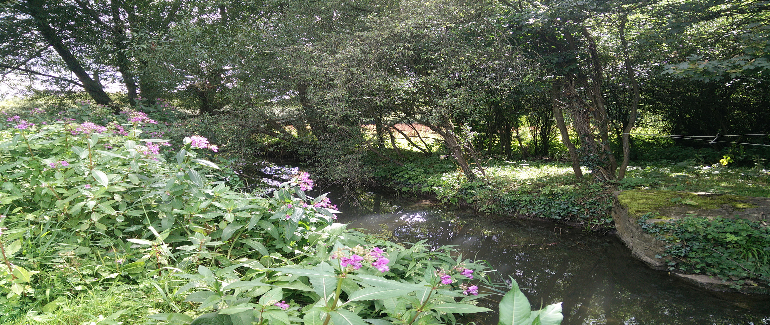Join us for Walking stories along the River Frome