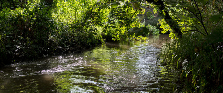 Discover the River Frome