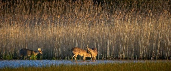 'A Walk in the Great Fen'. Free Wildlife Photography Workshop