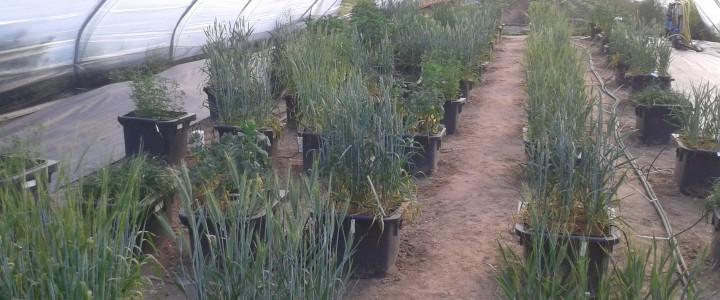 Exploring the impacts of drought on UK crops at Harper Adams University Newport, Shropshire – 24th May 2016