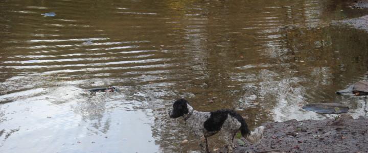 A river walk at Oldbury Court